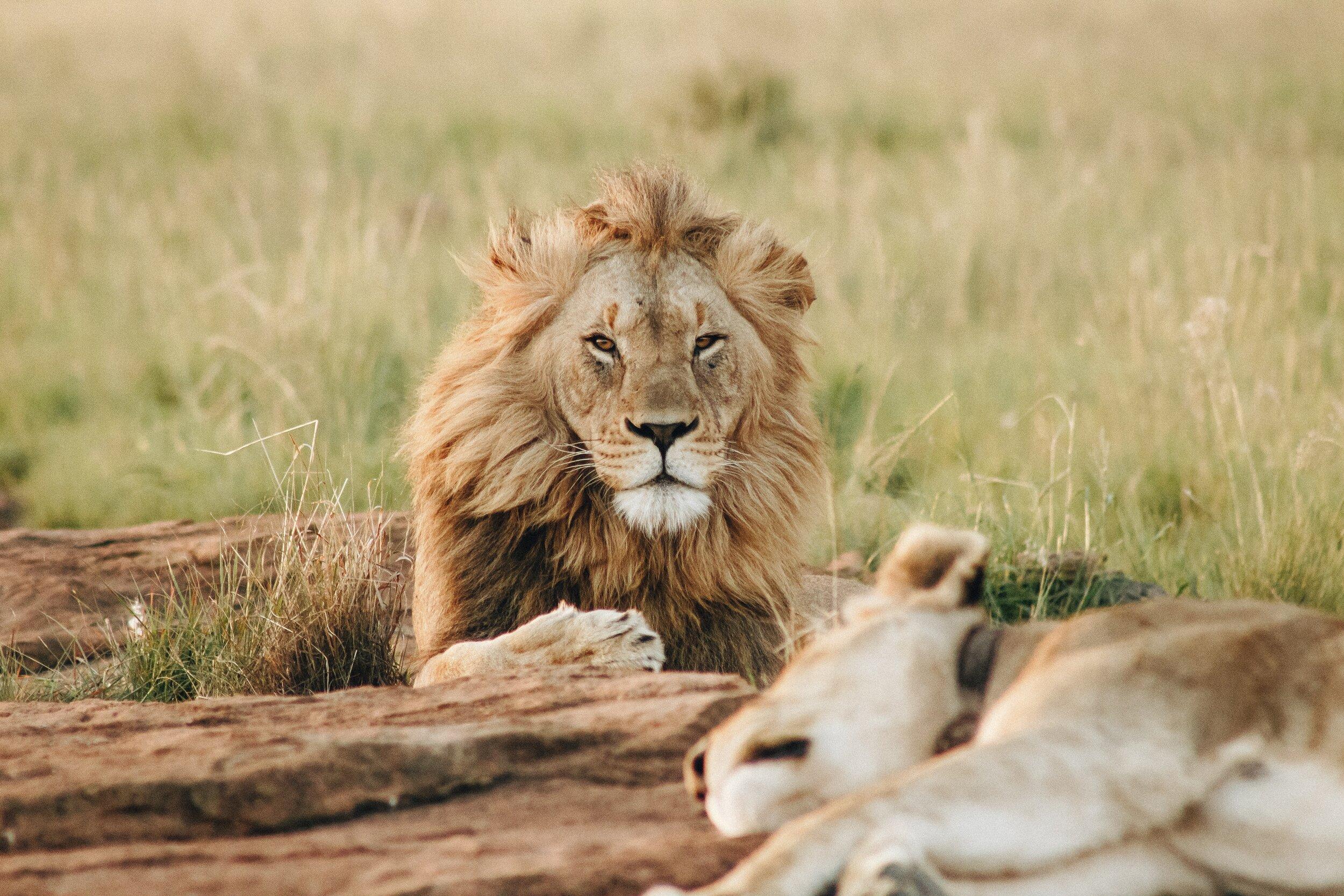 Wild Animal Safari Inc